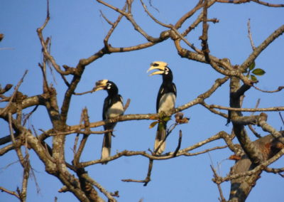 Birds in Bardia