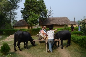Ox cart tours in Bardia