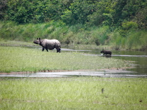 Mother and baby Rhino in Bardia