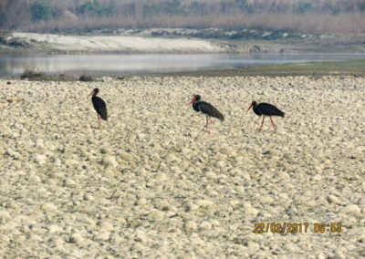 Bird watching in Bardia