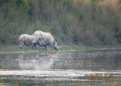 One horned Rhino at Bardia National Park