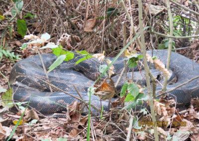 Snake in Bardia